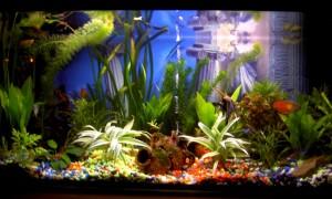 acuario-tropical
