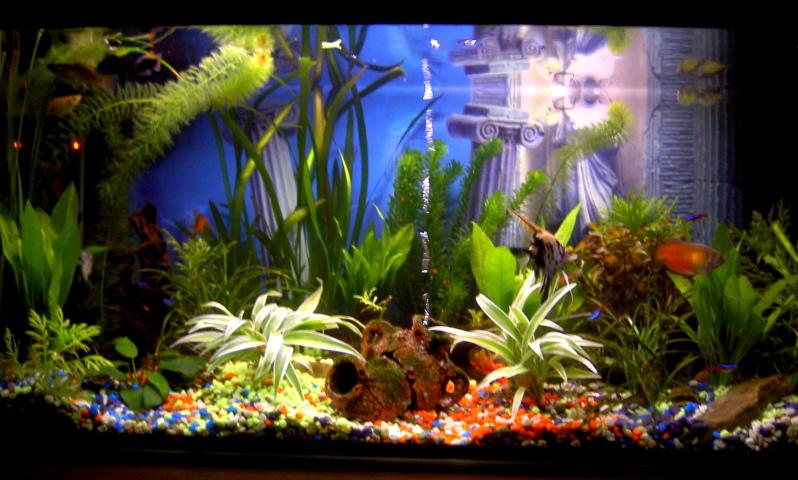 el acuario tropical biosfera
